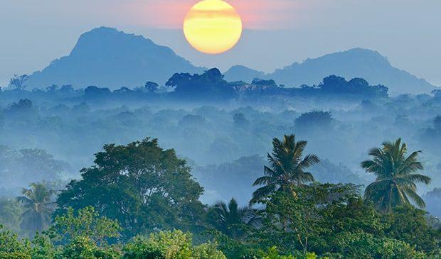 Paranüsse – das Gold aus dem Regenwald.