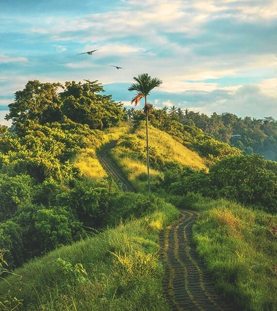 Plant a Tree Projekt