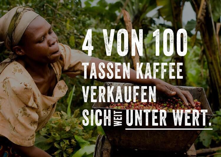 Ein Fair Trade Bauer erntet Bio Kaffee