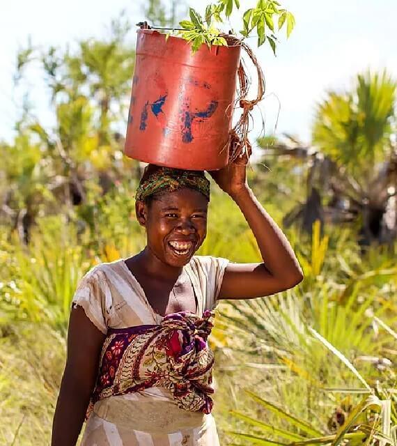 Farmerin pflanzt Mangrovenbäume in Madagaskar an.