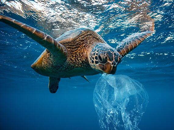 Mikroplastik schwimmt im Meer