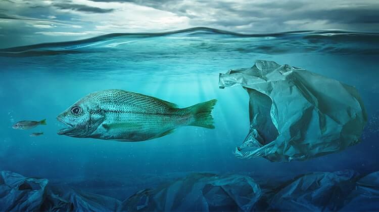 Plastikmüll gefährdet das Fischvorkommen im Meer
