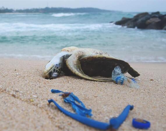 Schildkröte durch Plastik erstickt