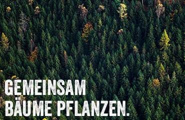 Gemeinsam Bäume pflanzen Projekt