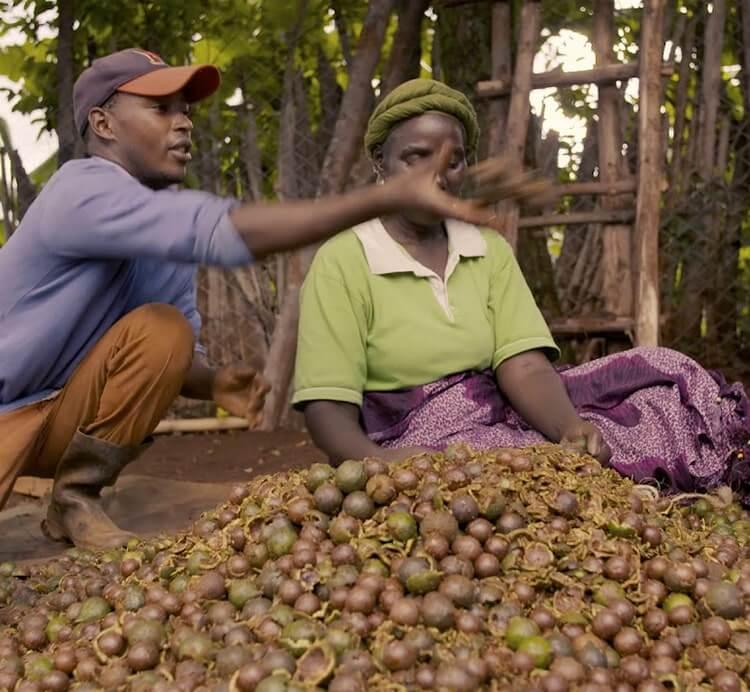 Zwei Macadamia Farmer in Kenia