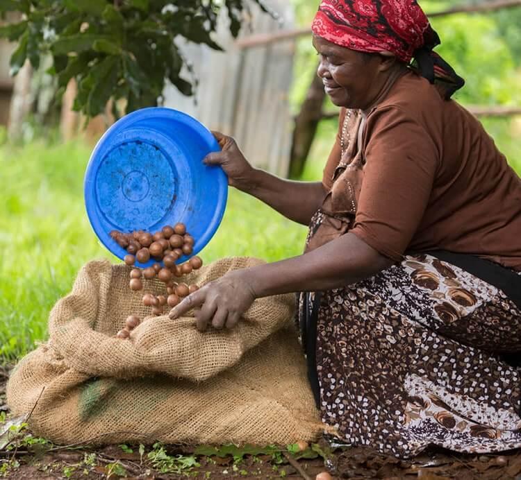 Macadamia Farmer aus Kenia