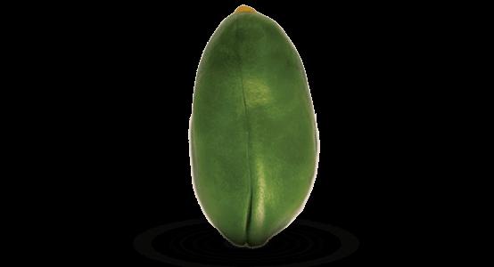 gruene pistazien beste qualitaet