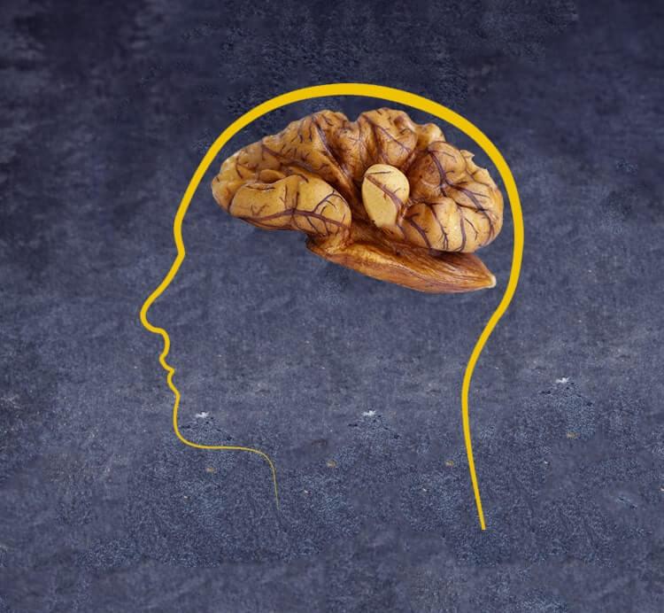 Walnusskerne sind Gehirnnahrung