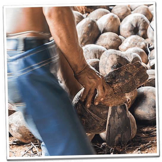 Kokosnüsse werden schonend geknackt