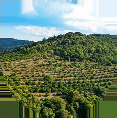 Haselnussanbau in Italien