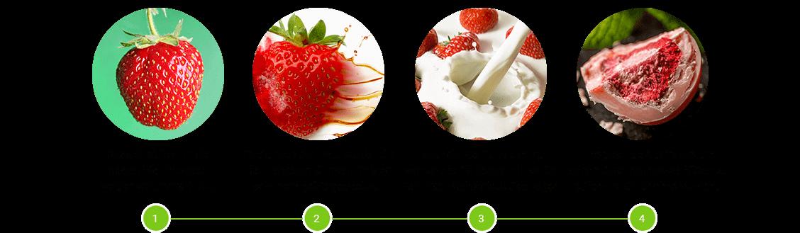 Gefriergetrocknete Erdbeeren in Beerenschokolade Herstellung
