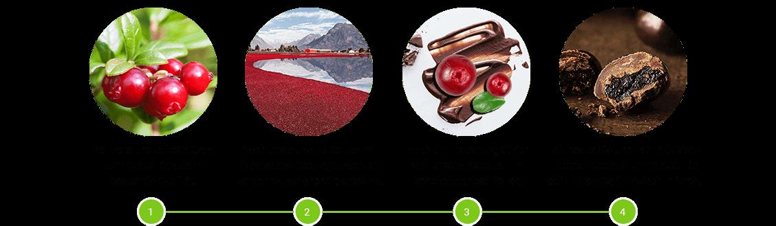 Cranberries in Zartbitterschokolade Herstellung